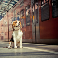 Dogs in public transport